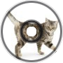 The Catz Are Walking(NG Cut)