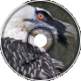 Birdcage Advertisement