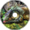 Iguana Iguana Main Theme