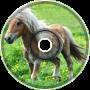 Raging Ponies