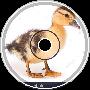 duck revolution