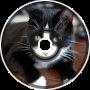 Meow [Aero]