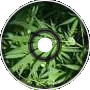 Marijuana is Legal