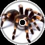 Spider - Newbie