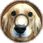 -Dog Republic-