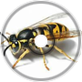 Wasp Swam