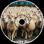 Count N' Sheep