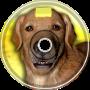 Butter Dog